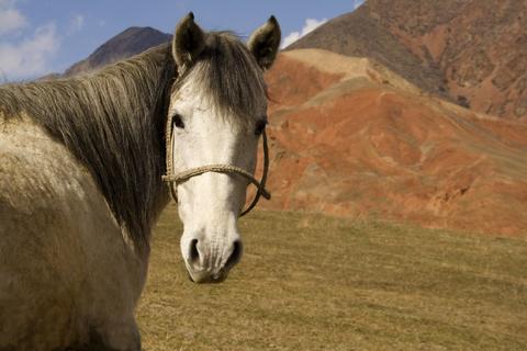Voyage en Kirgizstan